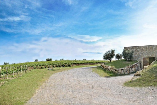 La Selva Vineyard.jpg