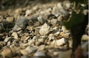 Chablis vineyard soil. Terroir