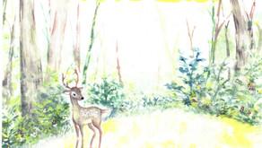 11月7日(日) 花脊地域でイベント『花背の森で木と遊ぶ』が開催されます。