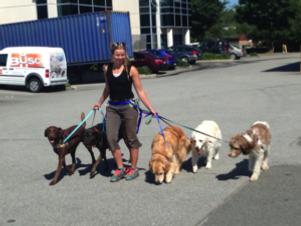dog-walking-certification-300x225.png