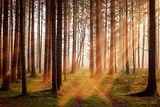 forest-3448818_1920.jpg