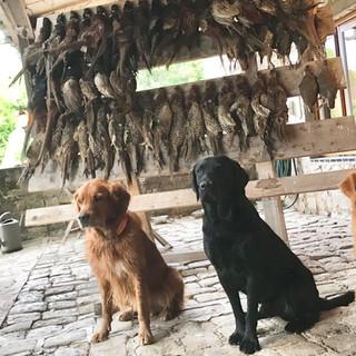 Oktober 2018  Niederwild Jagd in Frankreich