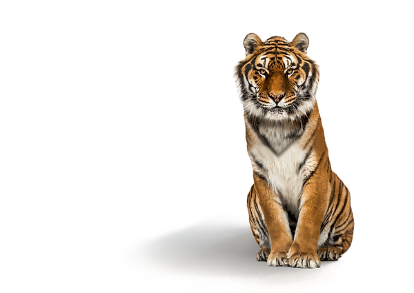 Jetty_aluminium_PREVIEW-tiger.png