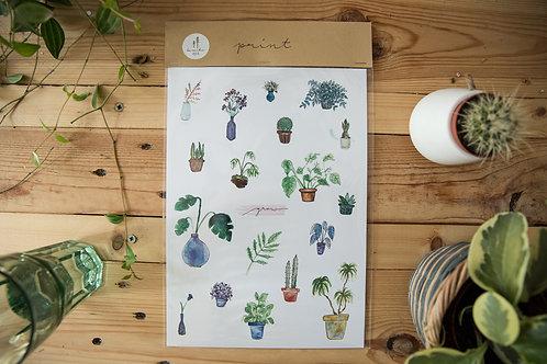 Print Grow