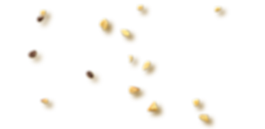 pacer_espresso_banner_bits.png