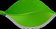 leaf-735878_960_720.png