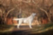 SOLGAFOTO-2.jpg