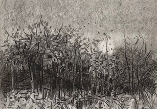 Heswall Dales, thicket