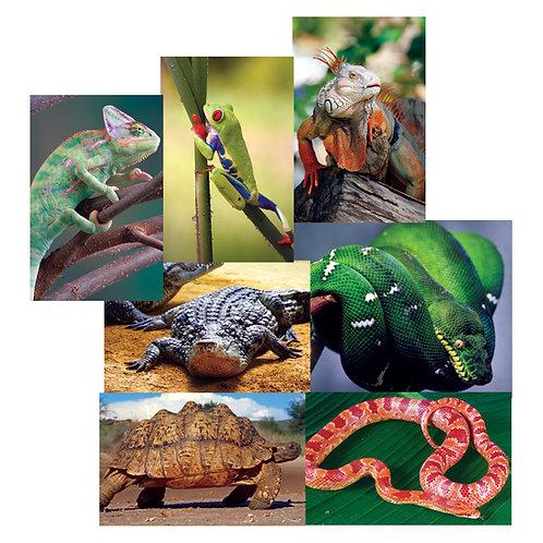 Reptilians Poster Set
