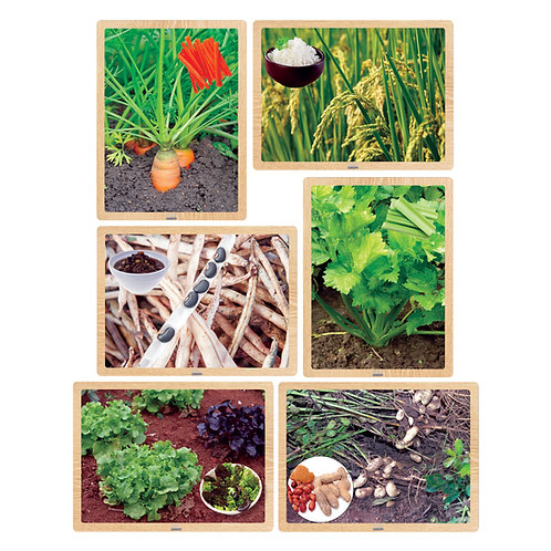 Growing Up Green®/Foods from the Earth Wooden 6-Puzzle Set