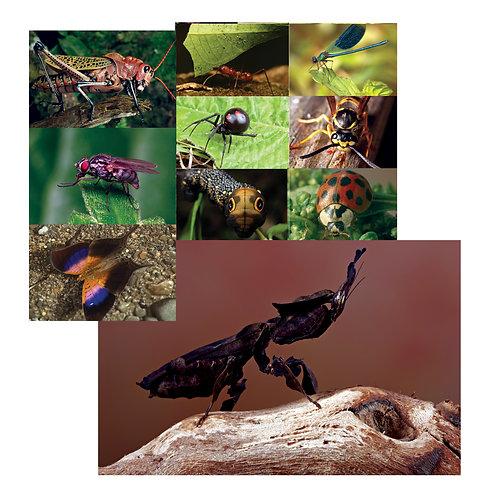 Bug-Tastic Poster Set