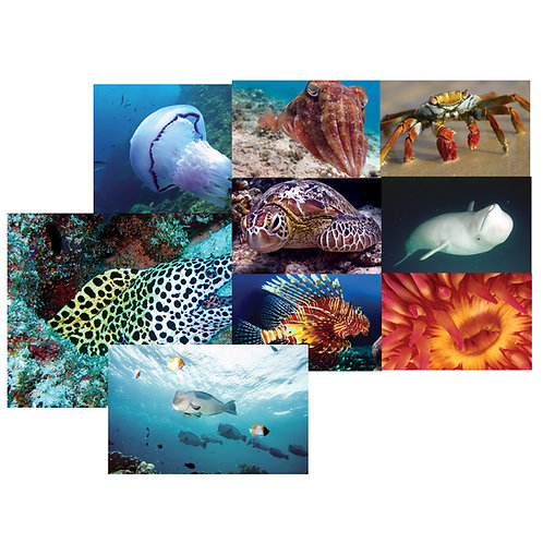Ocean Discovery Poster Set