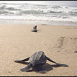 tartarugas.jpg