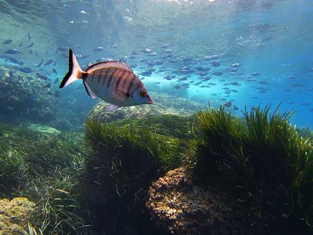 Beneficios del Snorkel