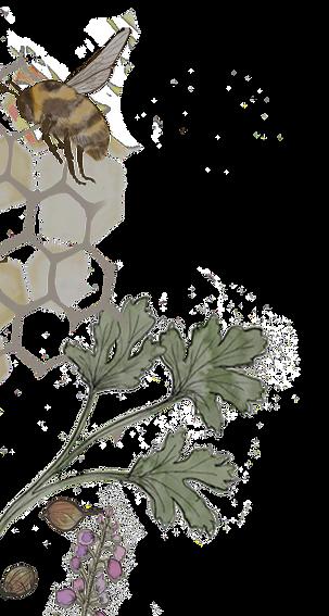Orkney Gin co botanical Badge T Shirt Corrected_edited_edited_edited_edited_edited.png
