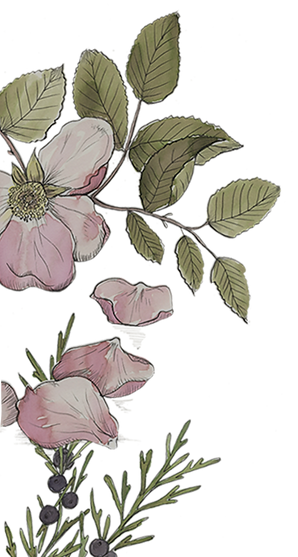 Johnsmas Botanicals 1_edited.png