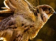 Feather Dreamcatcher_background.jpg