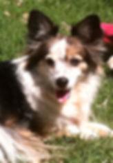 Bandit, Dog Training
