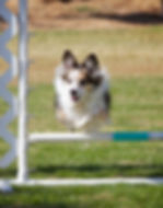 pack walks, dog training