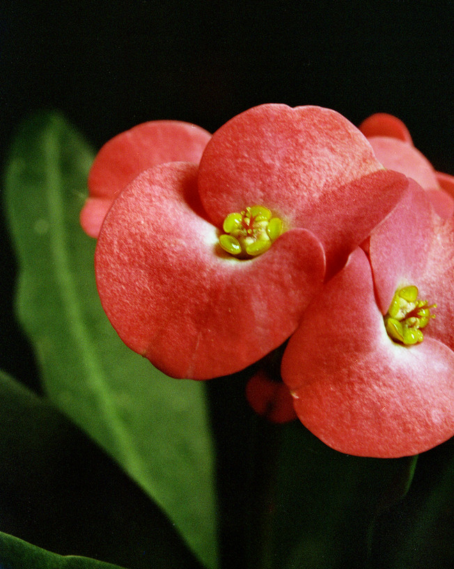 flower2020_03.jpg