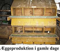 Hønseri og æggeproduktion i gamle dage