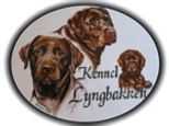 logo_lyngbakken.png