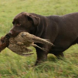 Jagt & Spor