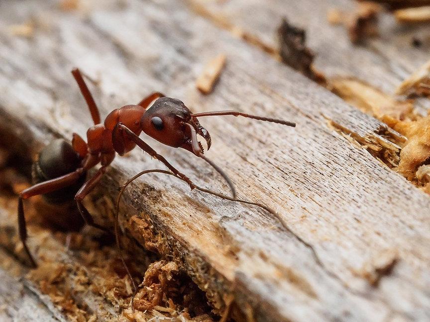 Moisture Ants 3.jpg