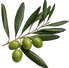 Newsletter 20 - our new OLIVE friends scheme is launched 26.04.21