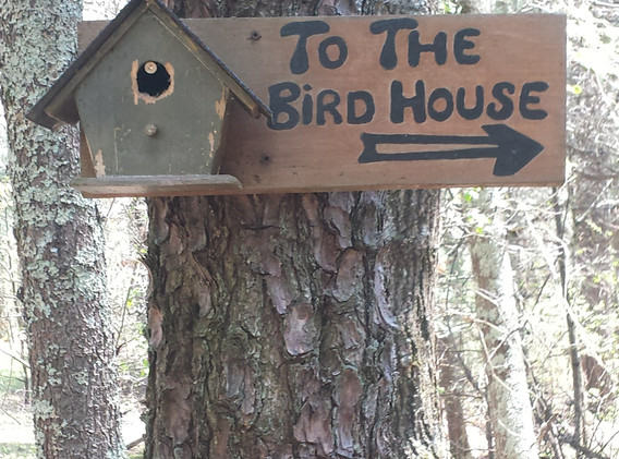 Path to the Bird House
