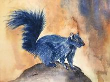 native squirrel.jpg