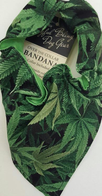 Marijuana / Hemp