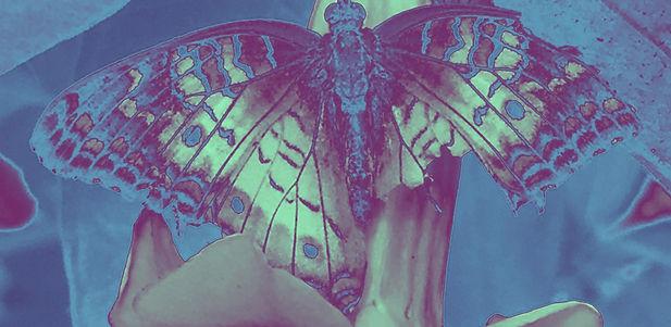 gradient butterfly 2_edited.jpg