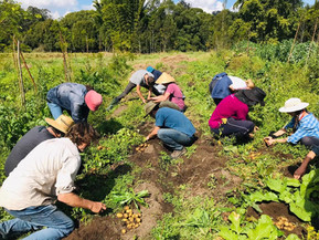 Permaculture in Action at Zaytuna Farm in Eastern Australia