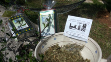 Organic Olive Leaf Tea from Masseria Due Torri