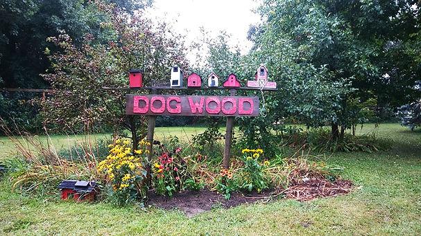 dogwood.jpg