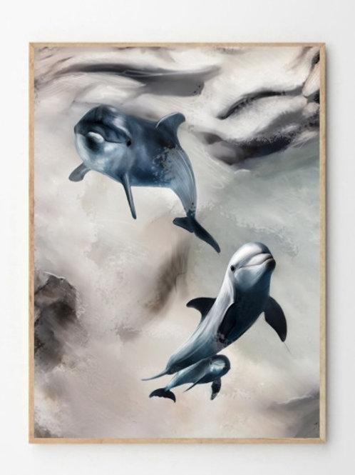 Delfiner / Dolphins