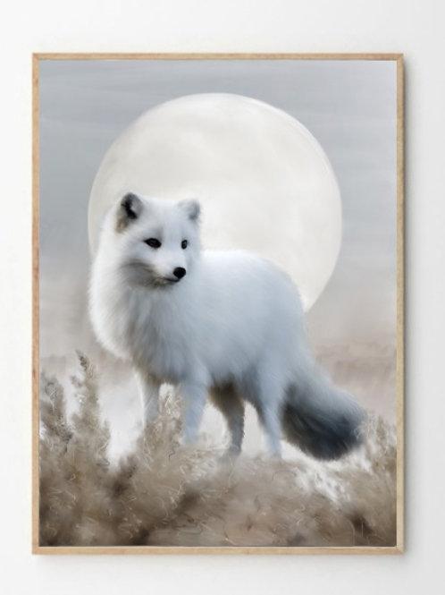 Fjellrev / Arctic fox