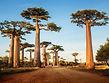 Madagaskar-baobab-shutterstock_187374941