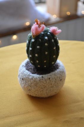 Cactus en feutre à l'aiguille