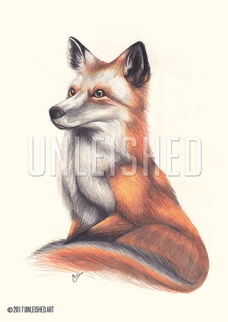 Fox pencil illustration print (A3)