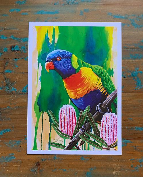 'Reggie' Rainbow Lorikeet Print