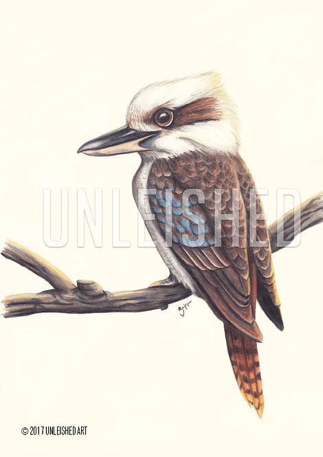 Kookaburra pencil illustration print (A3)