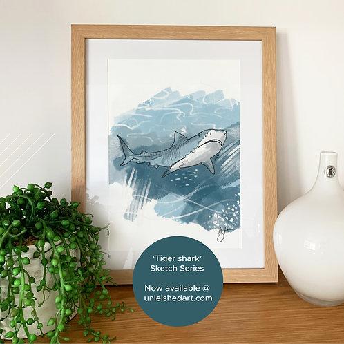 Tiger Shark - sketch series