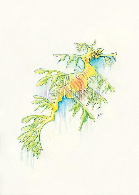 Leafy Sea Dragon Limited Edition Print