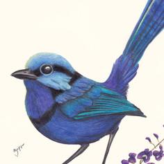 fairy wren print
