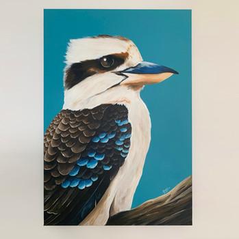 kookaburra 1.jpg