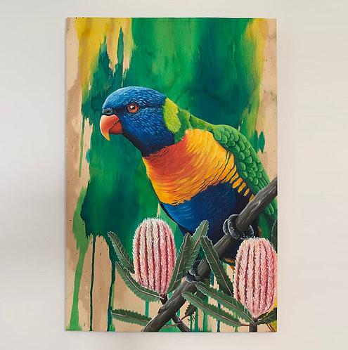 SOLD - Rainbow lorikeet (m)