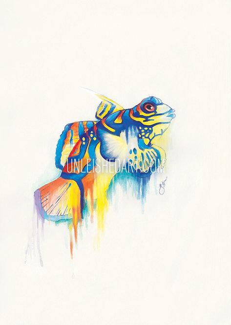 Manderin Fish Limited Edition Print