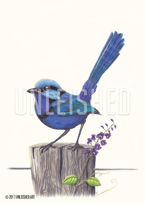 Wren pencil illustration print (A3)
